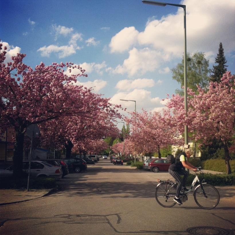 Spring blossom beauty